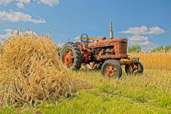 Old tractor in a wheat field Manitoba Agricultural Museum