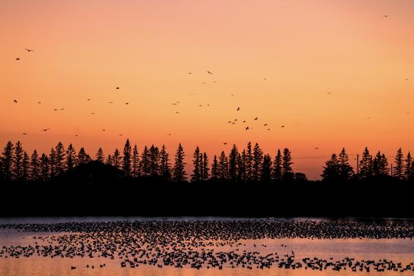 Birds at Sunset - Fort Whyte Alive -  - Manitoba Virtual Background