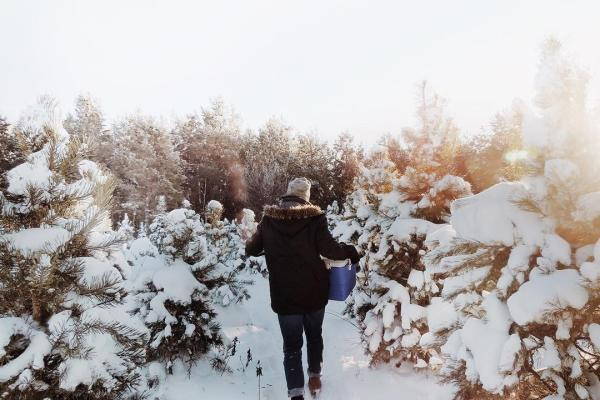 A person walks in between rows of snow-covered evergreen trees at Timber Trails Tree Farm