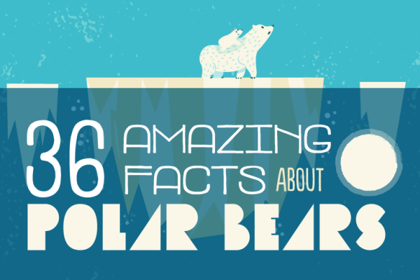36 Amazing Facts About Polar Bears