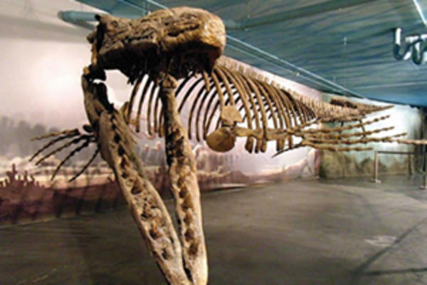 Bruce the Mosasaur in Morden, Manitoba