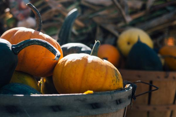 Take a Pumpkin Spice Tour of Manitoba