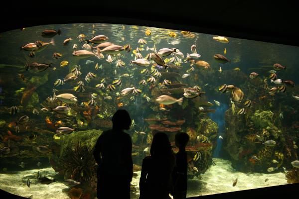Ripley's Aquarium - Rainbow Rock