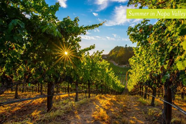 Visit Napa Valley in the Summer