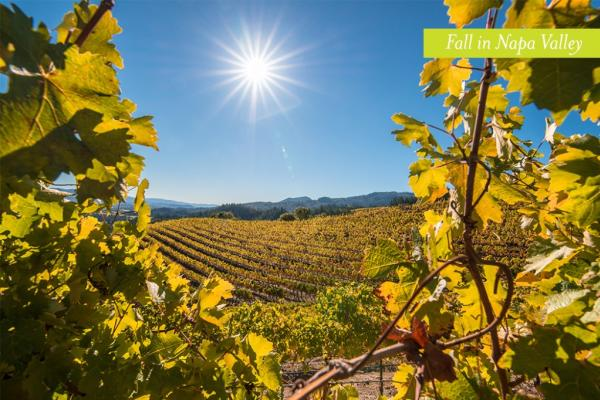Visit Napa Valley in the Fall