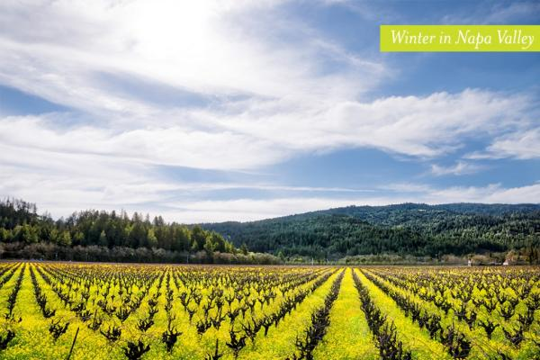 Visit Napa Valley in the Winter