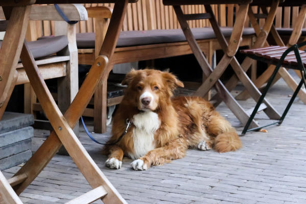 Dog sitting on outdoor patio