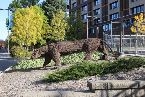 Saskatoon Cougar