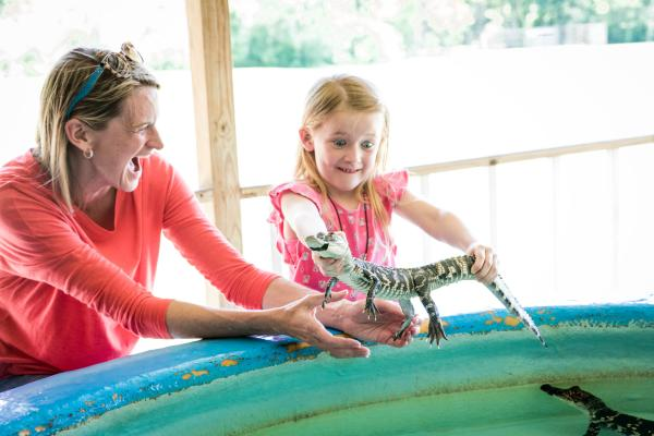 Mother and Daughter Playing with Alligators of all sizes at Insta-gator Ranch and Hatchery