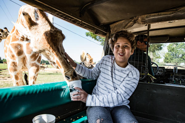 Kid In Car With Giraffe looking in the window at Global Wildlife Center in Folsom