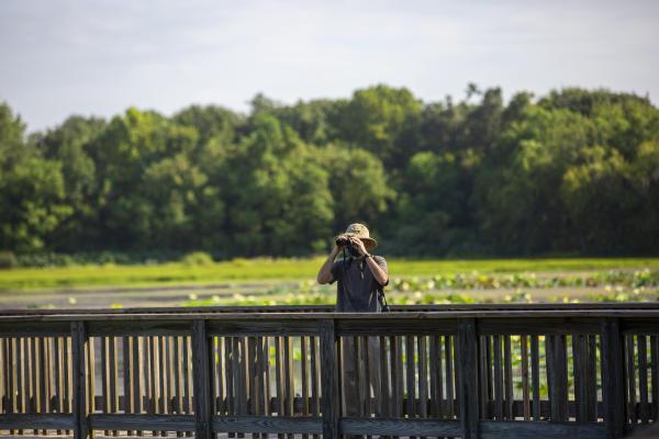 green area with man wearing binoculars at park