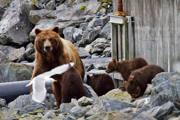 a bear and cubs