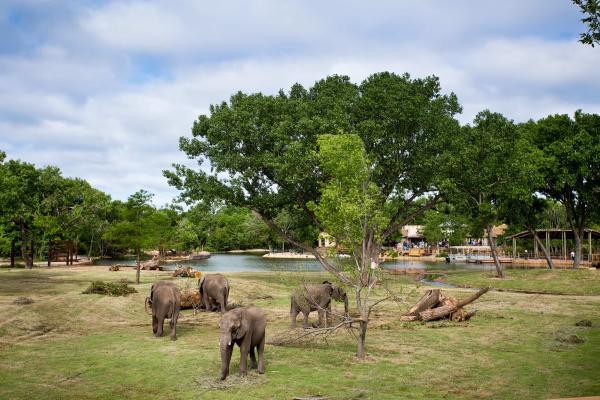 Elephants at the Sedgwick County Zoo
