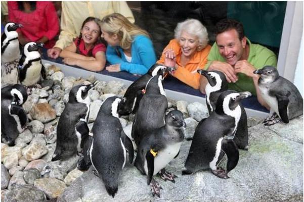 Ripley's Aquarium penguins