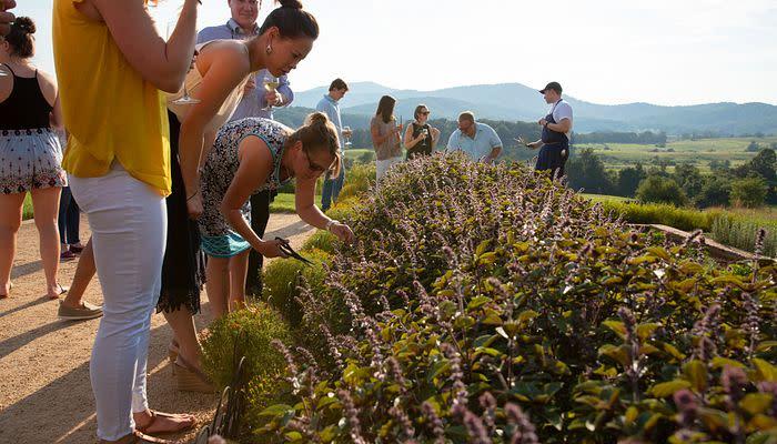 Pippin Hill Farm & Vineyards