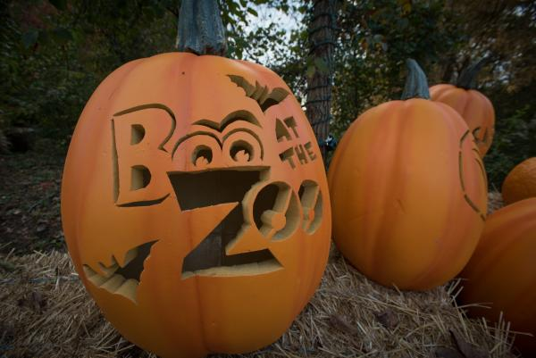 Boo at the Zoo carved pumpkins