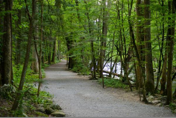The Gatlinburg Trail