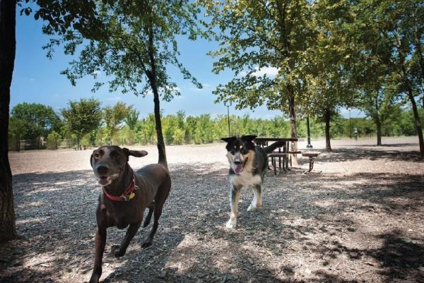 Dogs running at Bonnie Wenk Dog Park