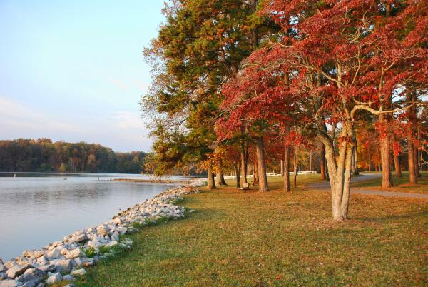 Fall Trees Lakefront