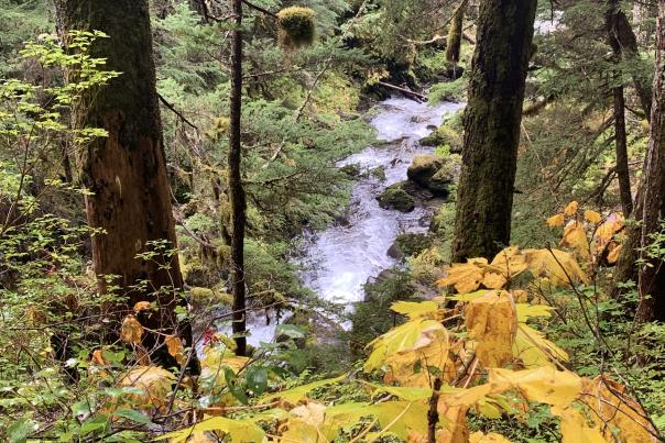 Painted leaves surround Virgin Creek Falls