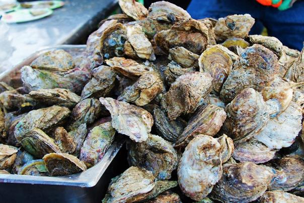 oysters-at-oyster-roast