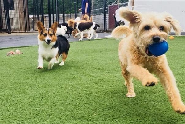 Staycation Options for Your Furry Family Members