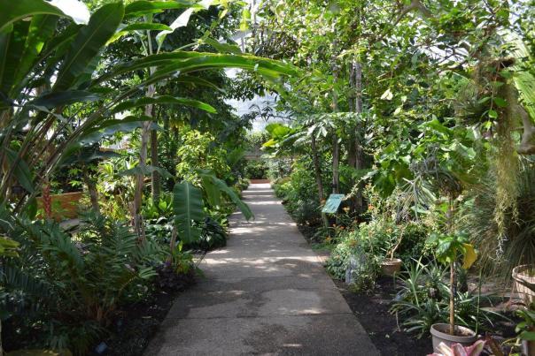 Matthaei Pathway
