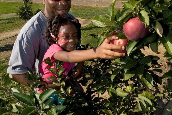 Wiards Apple Picking
