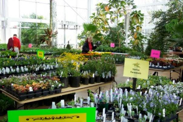 Plant Sale Botanical Garden