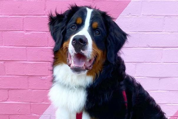 dog; puppy