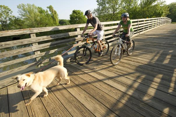 biking with dog on wood bridge