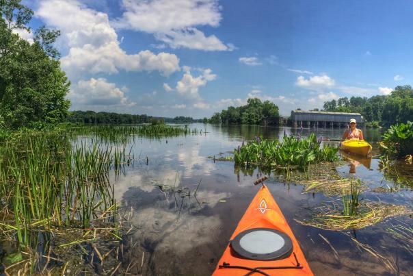 orange kayak on lake with reeds