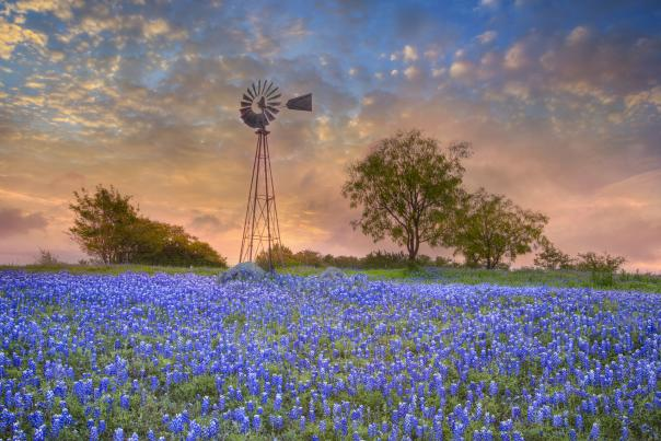 Windmill and Bluebonnets in the Morning. Credit Rob Greebon_exp Feb 2019