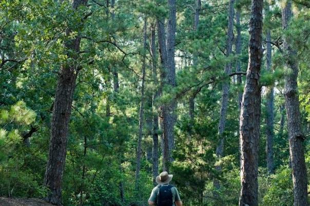 Hike Bastrop State Park