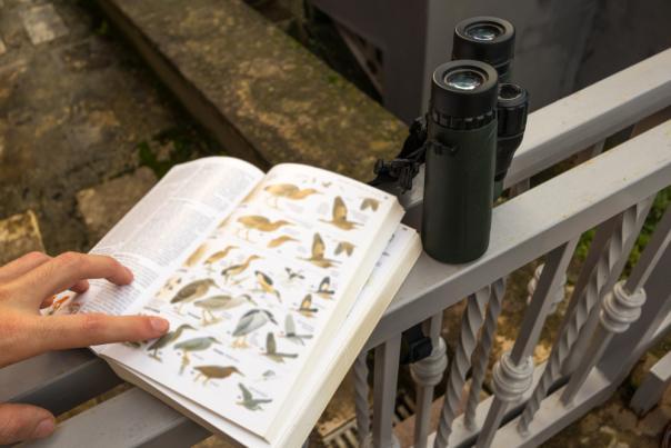 Birdwatching - Stock