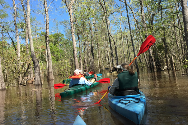 Two people kayaking through Big Thicket National Preserve near Beaumont, TX