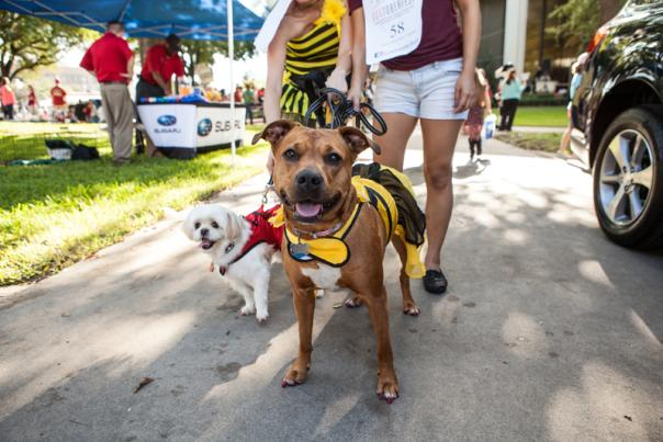 Dogtober Fest in Beaumont, Texas