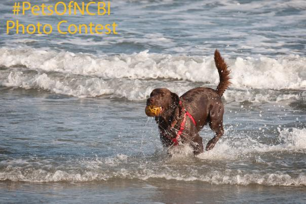 dsc_6532_dog-oak-island-contest