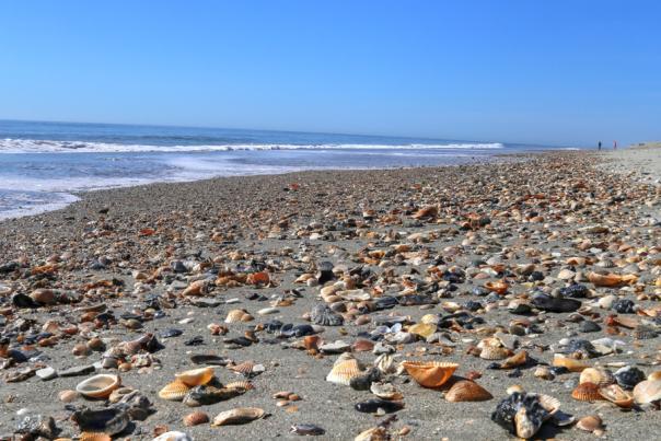 IMG_4448_Holden Beach shells