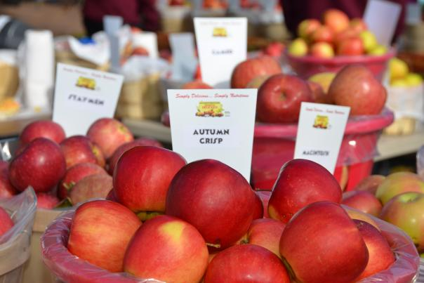 Take home a bushel fresh from the orchard during Apple Festival in Peddler's Village.