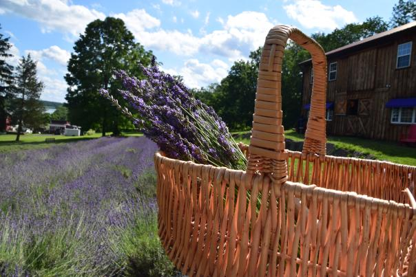 Peace Valley Lavender Farm