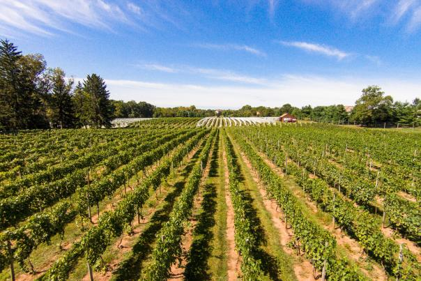 Crossing Vineyards Drone