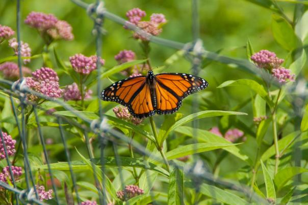 butterfly Audubon Society