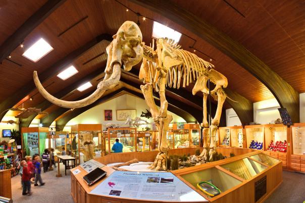 Dee The Mammoth