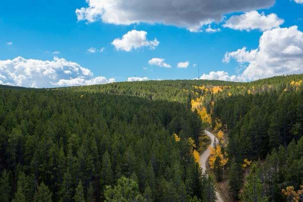 Aerial View of a Forest in Casper, WY