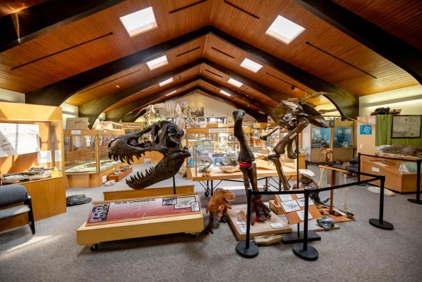 Tate Geological Museum in Casper features many dinosaur fossils for public viewing.