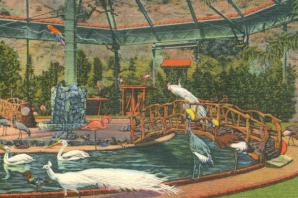 Avalon's Bird Park