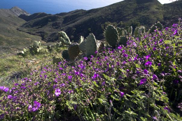 Catalina Island Wildflowers