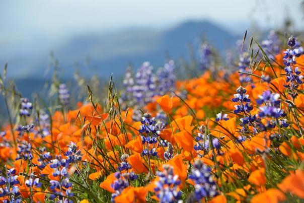 Wildflowers - Media