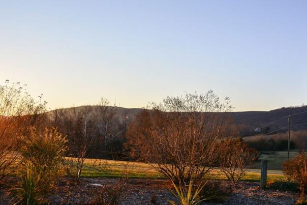 Jefferson Vineyards Sunset